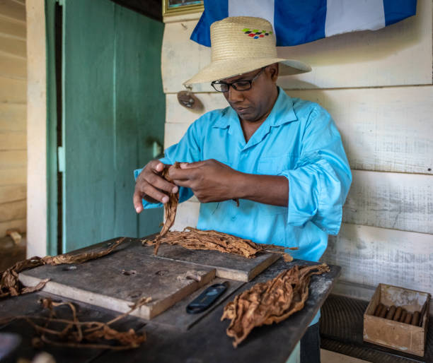 Cuban man rolls a traditional Cuban cigar in Vinales stock photo