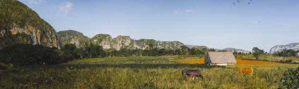 cuban national park tobacco field countryside panoramic - katiedobies stock pictures, royalty-free photos & images