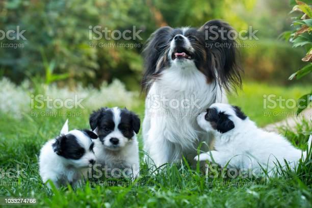 Cubs with mom picture id1033274766?b=1&k=6&m=1033274766&s=612x612&h=vfojqu1brct84x15rhl1ibfrndtfk pvdiexigja5km=