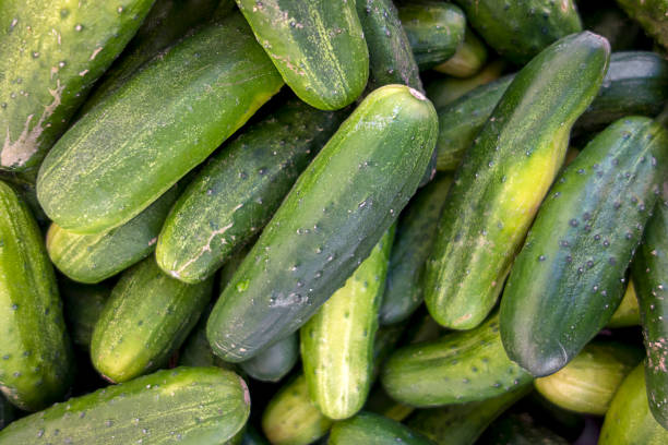 cucembers - cucumber stock photos and pictures