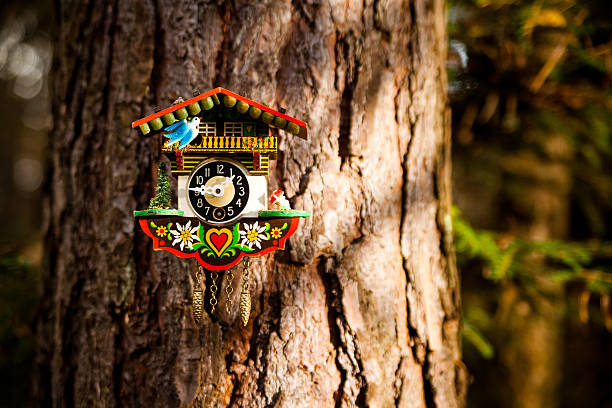 Kuckucksuhr im Wald Cuckoo clock in the forest black forest stock pictures, royalty-free photos & images