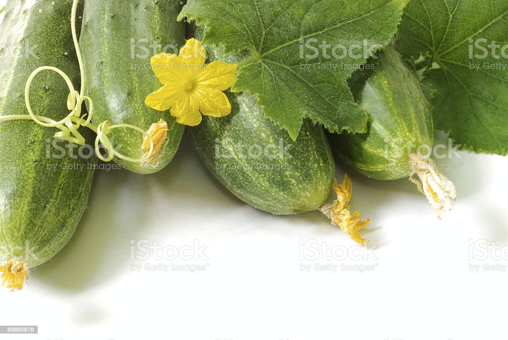 "Gurke ""harvest Lizenzfreies stock-foto"