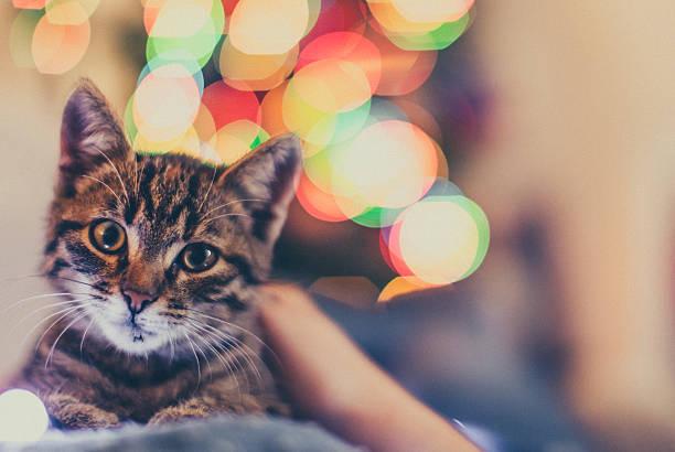 katze kuscheln - katze weihnachten stock-fotos und bilder