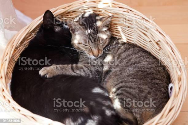 Cuddling cats picture id942334596?b=1&k=6&m=942334596&s=612x612&h=2aabtdpuj4zloqwfqko0xgkdal1dke6j q6ak1romvi=