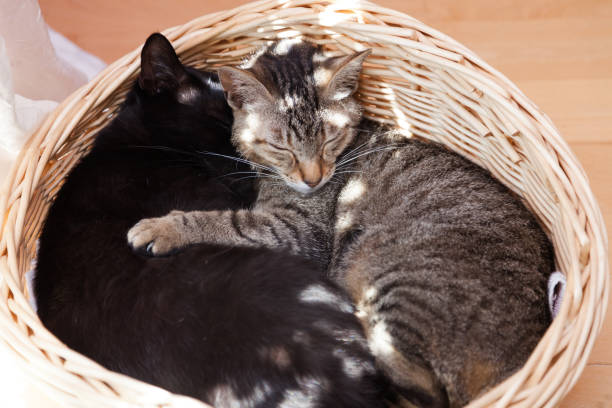 cuddling cats stock photo