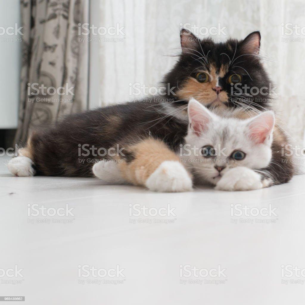 cuddling cats royalty-free stock photo
