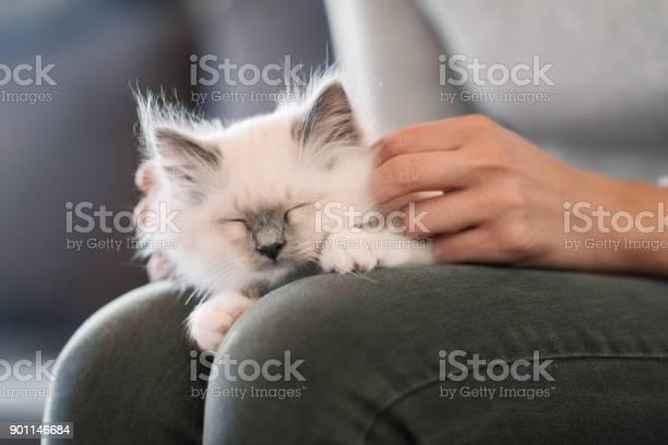 Cuddly cat lying on its owners lap picture id901146684?b=1&k=6&m=901146684&s=612x612&h=7owwoyxfv8 xv vivdrwumdkcf19fivqwklpxanhyr8=