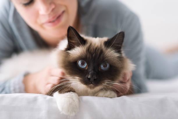 Cuddly cat on the bed picture id912723250?b=1&k=6&m=912723250&s=612x612&w=0&h=gbwpz2rwu1upiwdnzeec5u12fy2xpymzxy0omf immg=