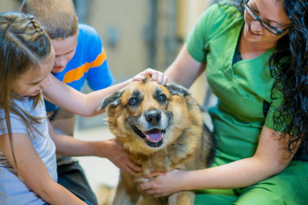 Cuddly Dog A Caucasian brother and sister, and a veterinarian, are indoors at an animal shelter. The siblings are wearing casual clothing and the vet is wearing work clothing. They are all petting a cute dog. rescue stock pictures, royalty-free photos & images