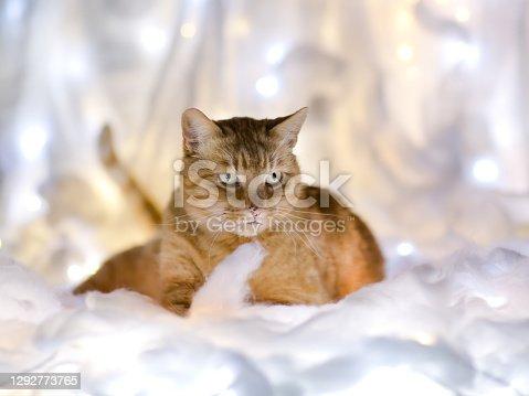 Katze liegt in beleuchteter Watte