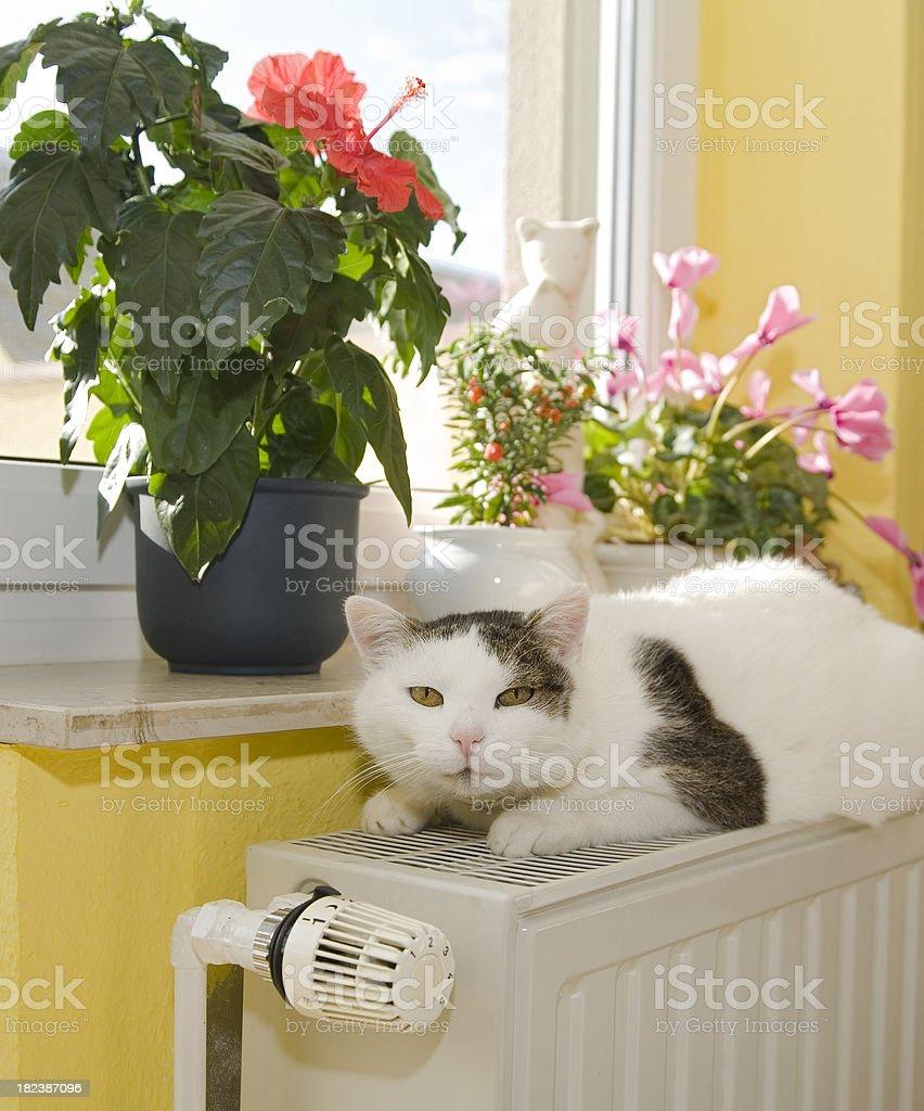 Cuddly warm royalty-free stock photo