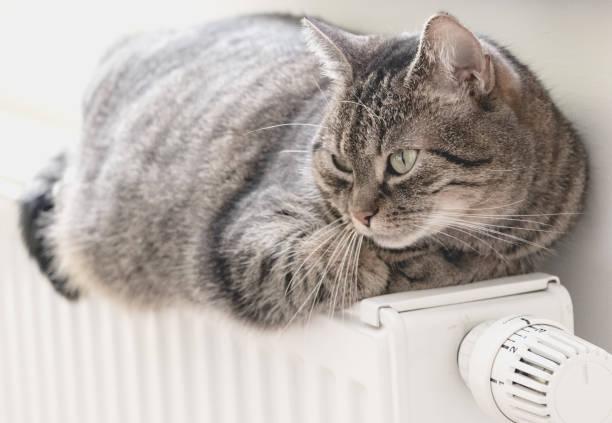 Cue cat lies on radiator stock photo