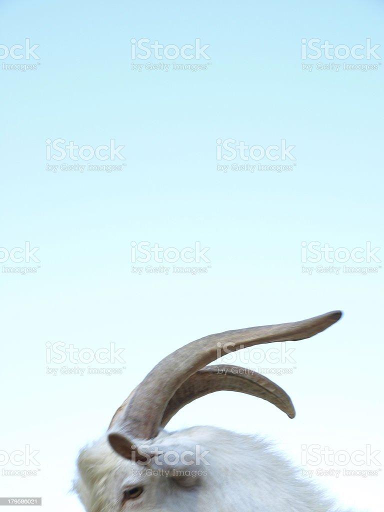 Cuernos de cabra stock photo