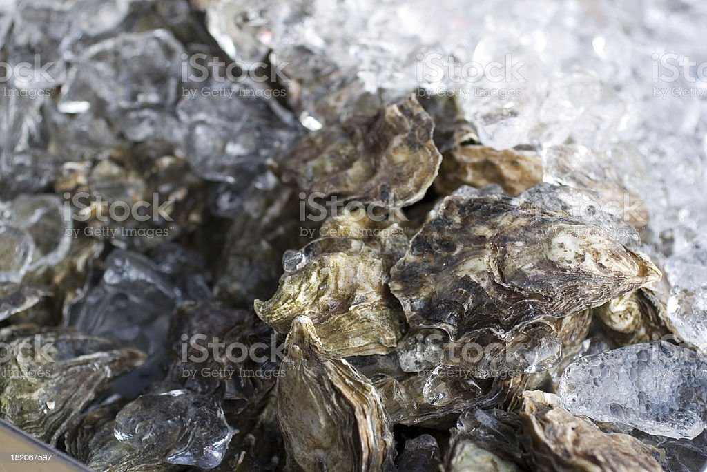 Culinary: Oysters on Ice royalty-free stock photo