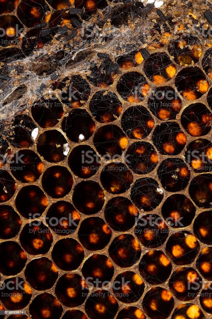 Culled brood frame with wax moth damage stock photo