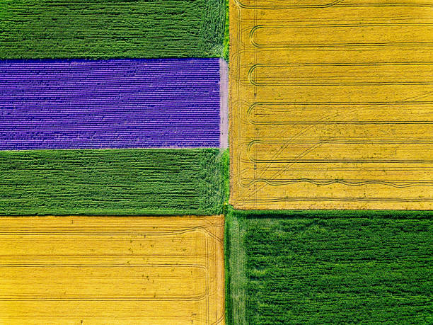 Cultivated farm land Aerial view of cultivated fields monoculture stock pictures, royalty-free photos & images