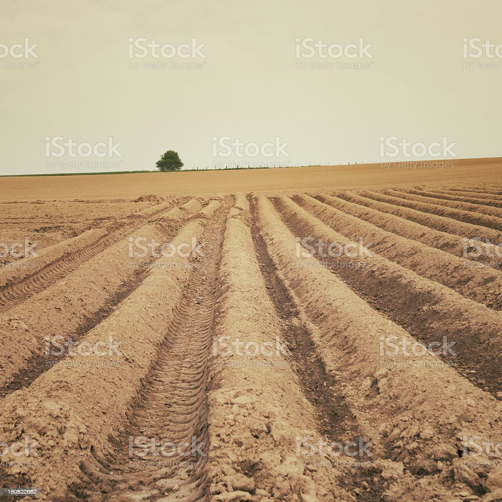 Cultivated farmland with furrows royalty-free stock photo