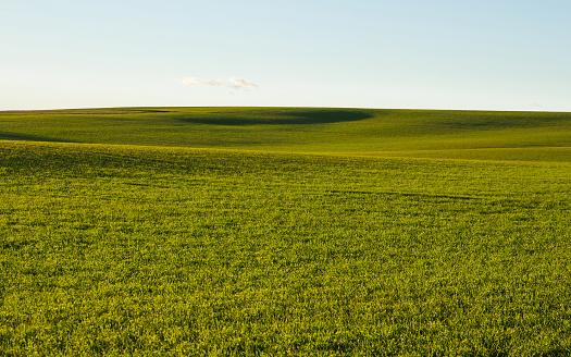 Cultivated field of Cereal in autumn - Campo Ondulado  Cultivado de Cereal en Otoño