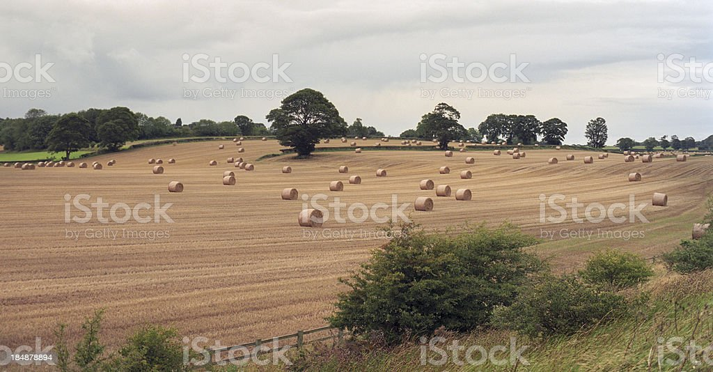 Cultivated land, England royalty-free stock photo