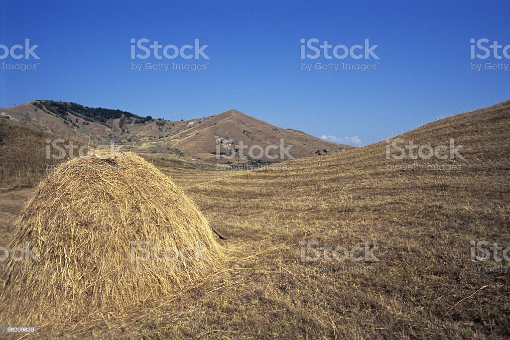 cultivated land in summer season royalty-free stock photo