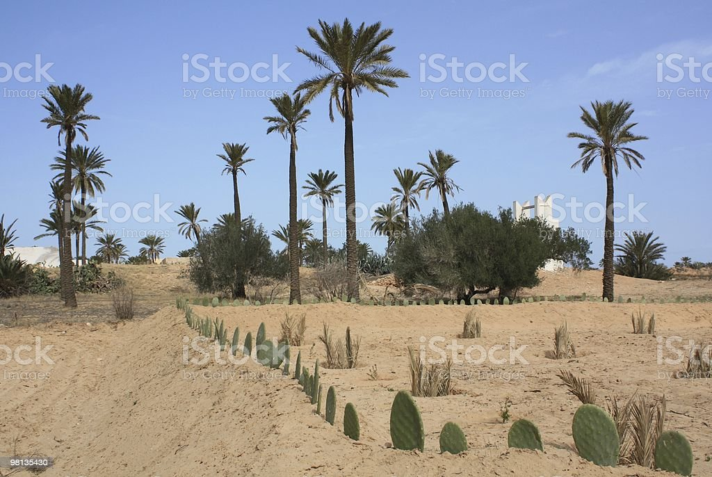 Cultivated Land on Djerba royalty-free stock photo