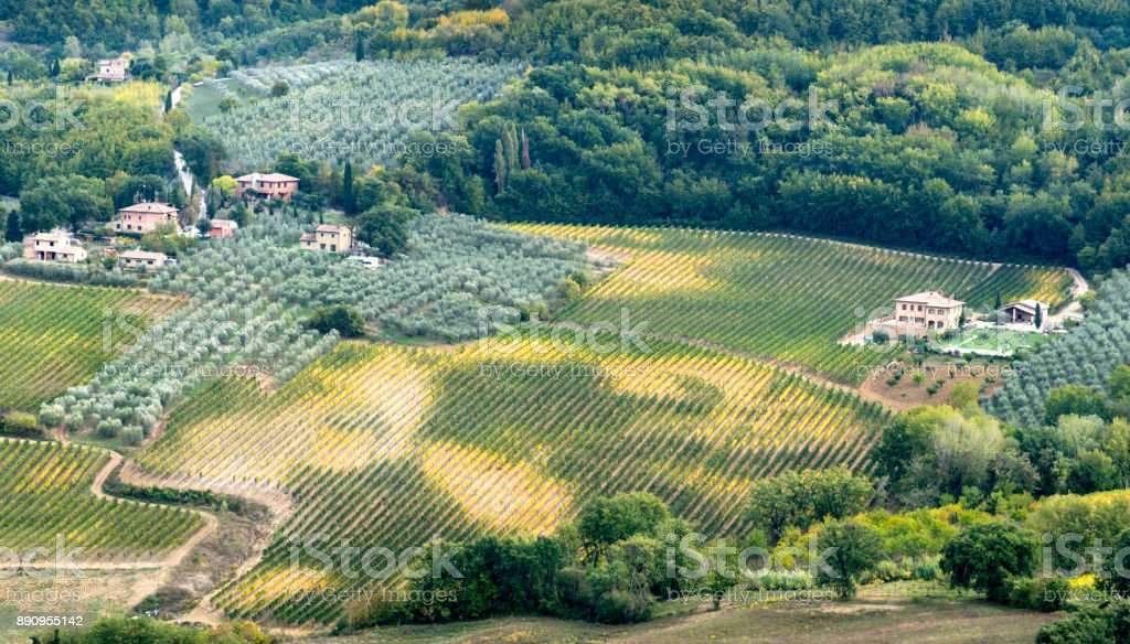 Cultivated Vineyards Tuscany  Italy stock photo