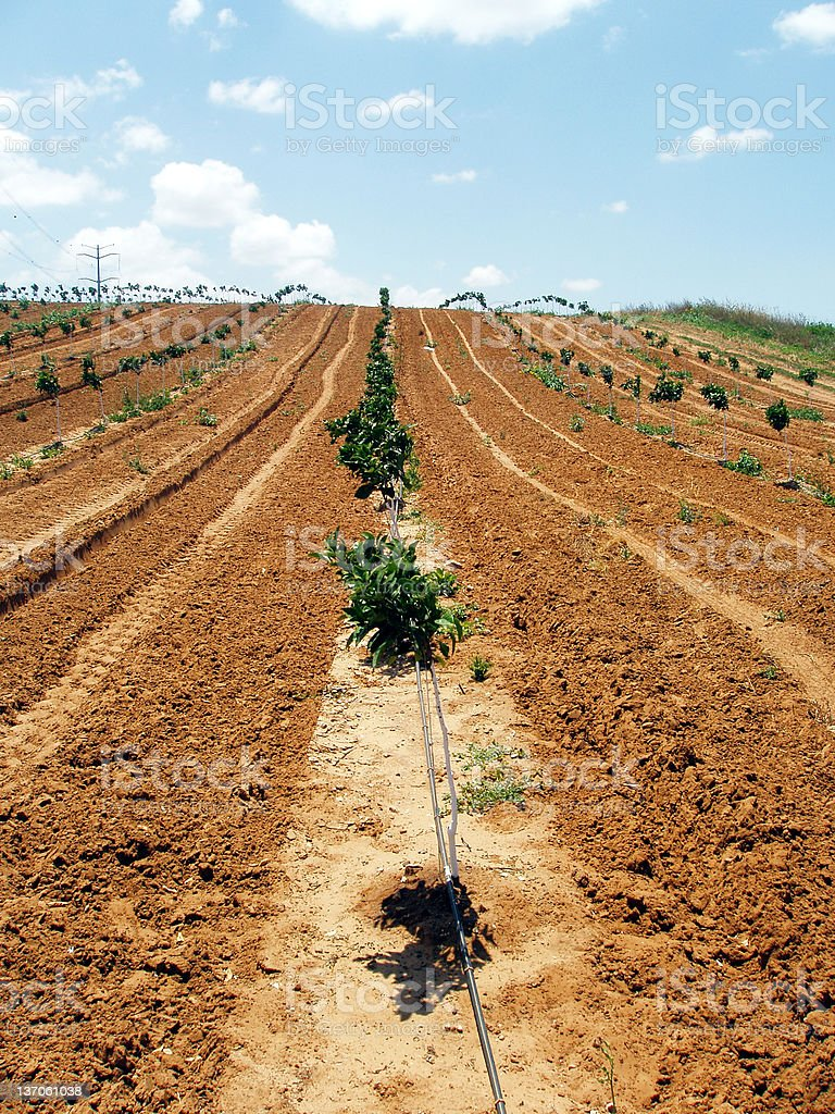 Cultivation field stock photo