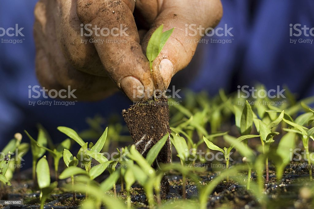 Cultivation royalty-free stock photo
