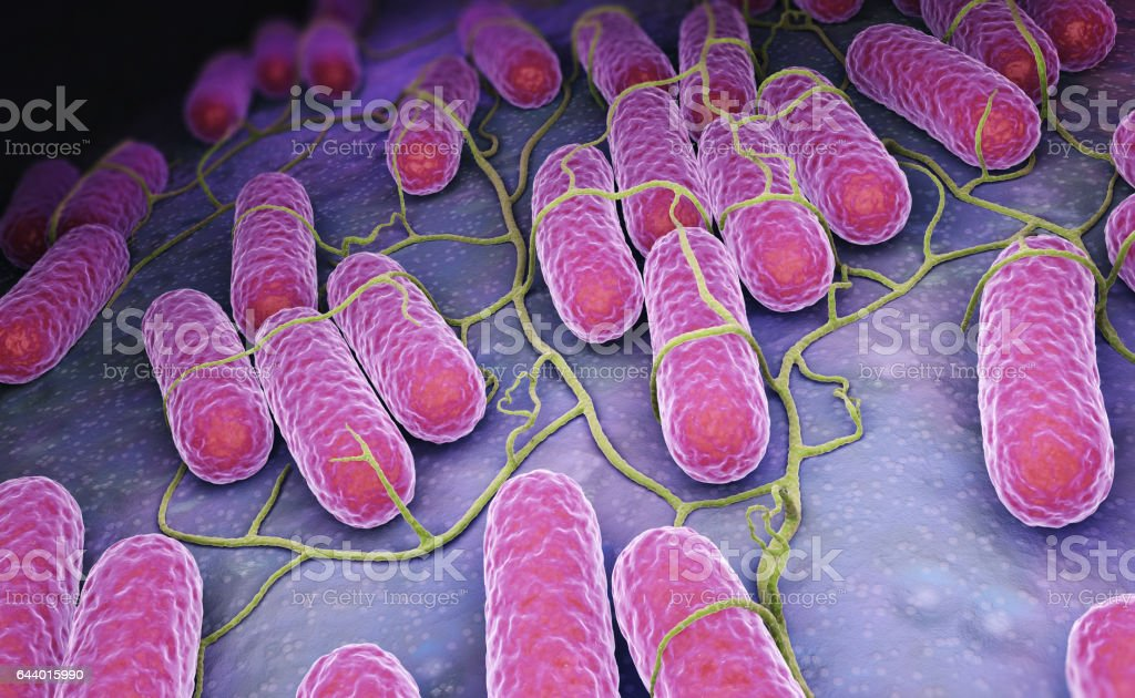 Culture of Salmonella bacteria - foto stock