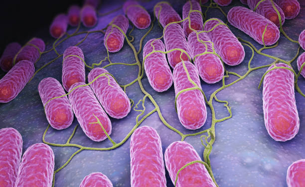 Culture of Salmonella bacteria stock photo