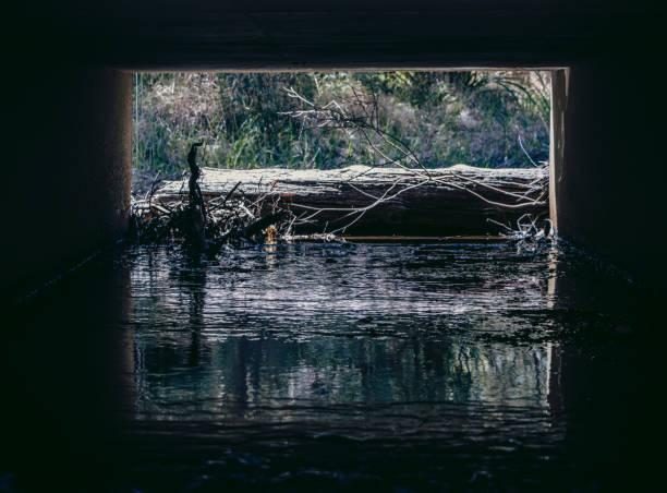 Culvert blocked by driftwood stock photo