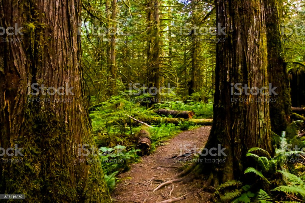 Cumberland Forest Trails stock photo