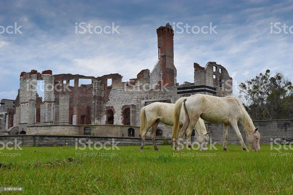 Cumberland Island, GA - Wild Horses and Ruins stock photo