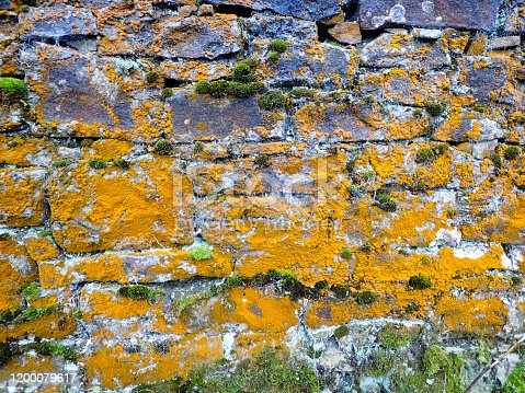 Cumbrian dry stone wall with lichens ideal for a textured background.