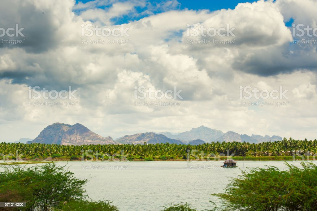 Cumulus clouds over palm trees stock photo