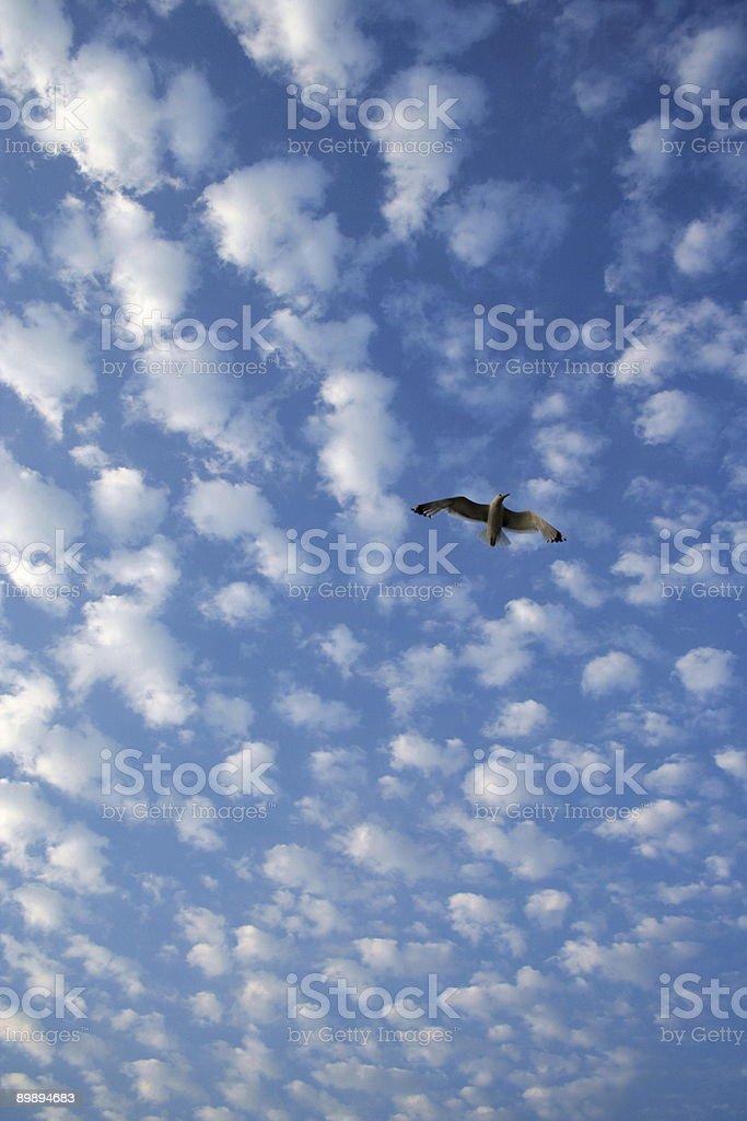 Кучевое облако Стоковые фото Стоковая фотография