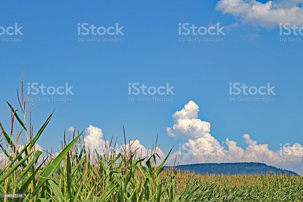 Cumulus Over The Corn royalty-free stock photo