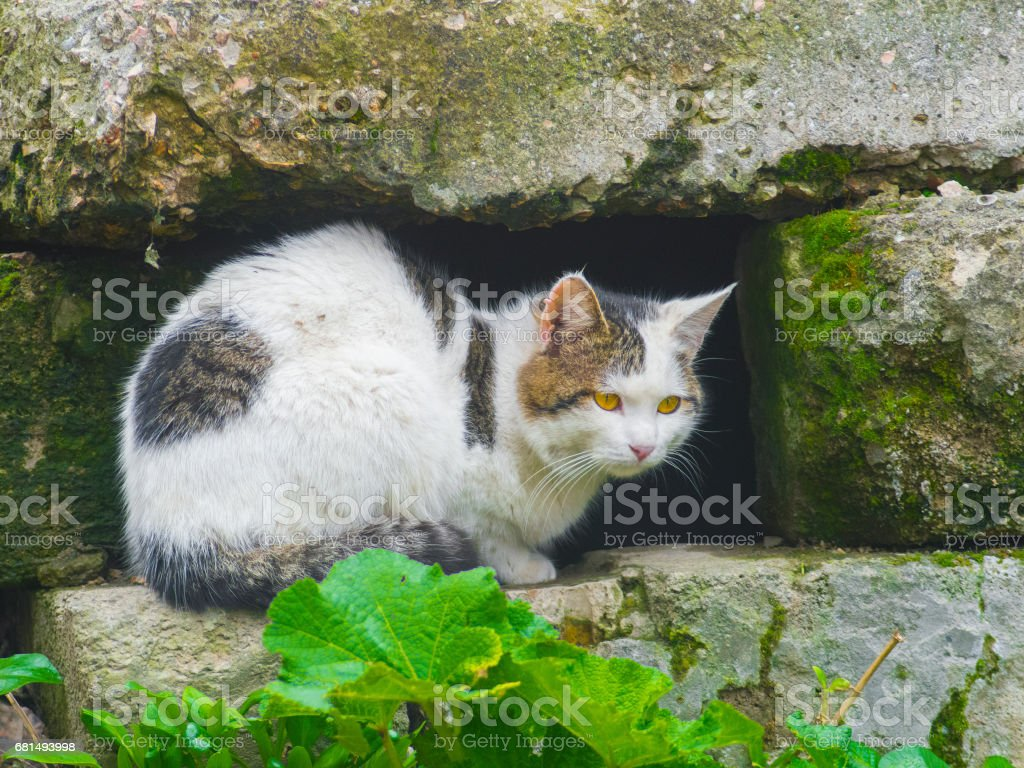 Cunning cat hides among the stones royalty-free stock photo