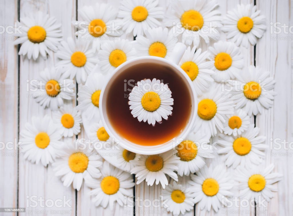 Cup of chamomile tea with fresh daisies. White fresh flowers on a...