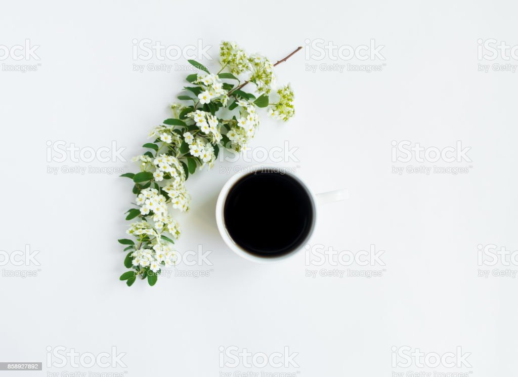 Cup of coffee and flowering Spirea arguta (brides plant) branch on white table. Flat lay, top view stock photo