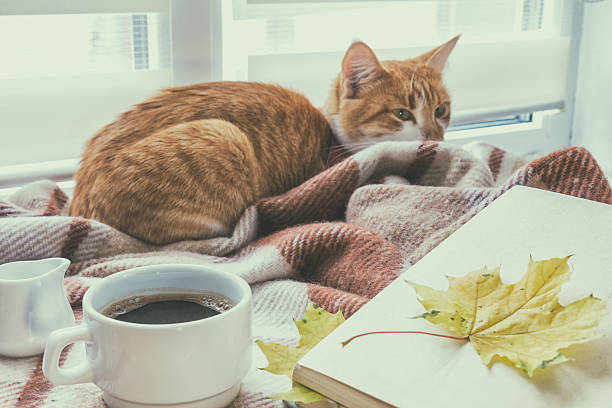 Cup of coffee, book and red-white cat stock photo