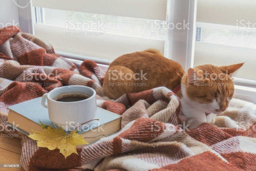 Cup of coffee, book with autumn yellow leaf and red-white cat surrounded wool blanket on windowsill stock photo