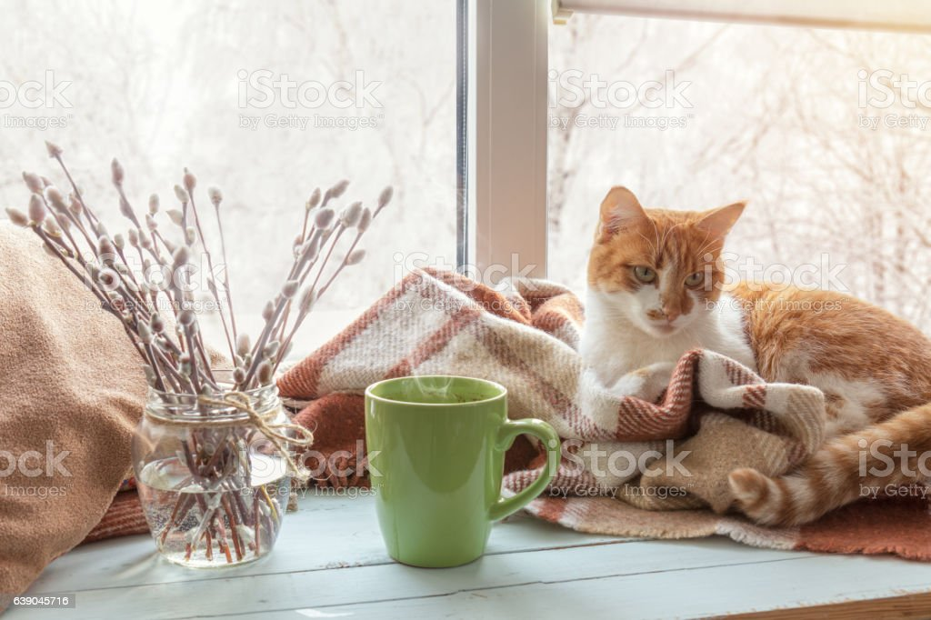 Cup of coffee on the window sill stock photo