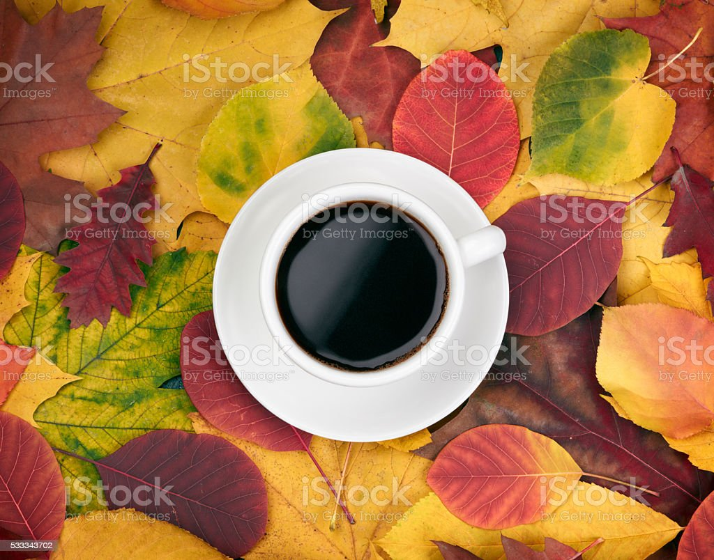 Cup of coffee over autumn leaves  background stock photo