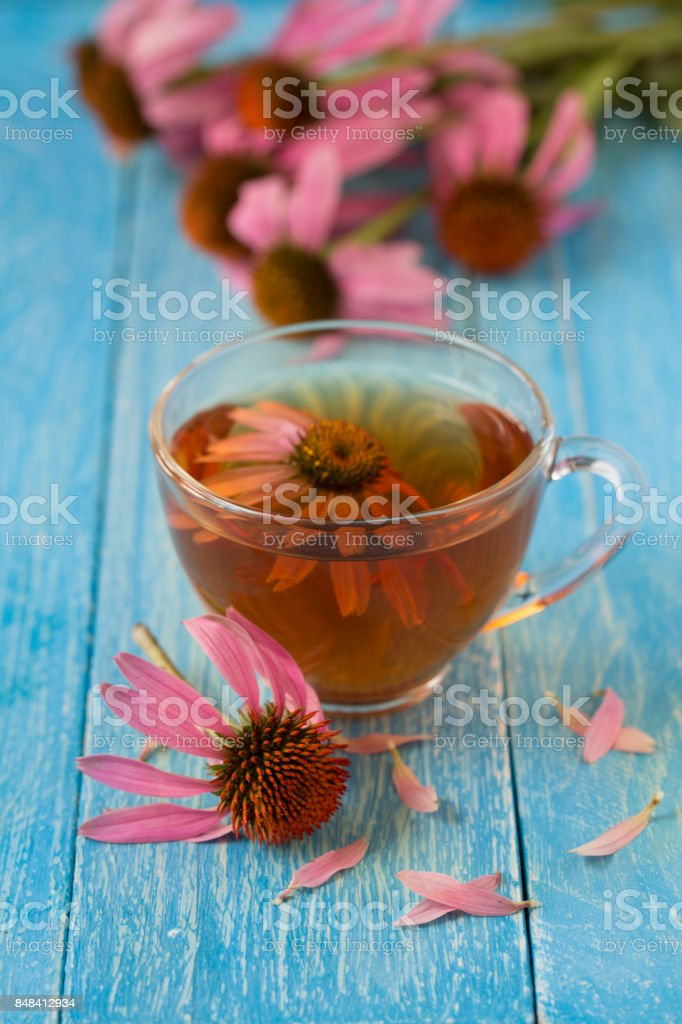 Cup of echinacea tea on blue wooden table stock photo