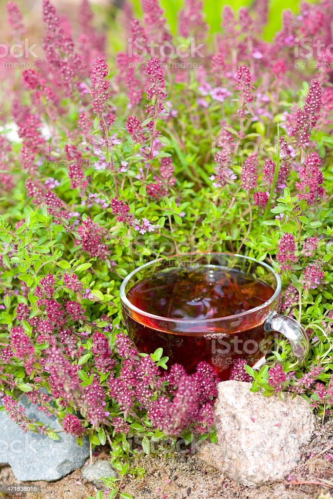 Cup of herbal tea in thyme herbs royalty-free stock photo