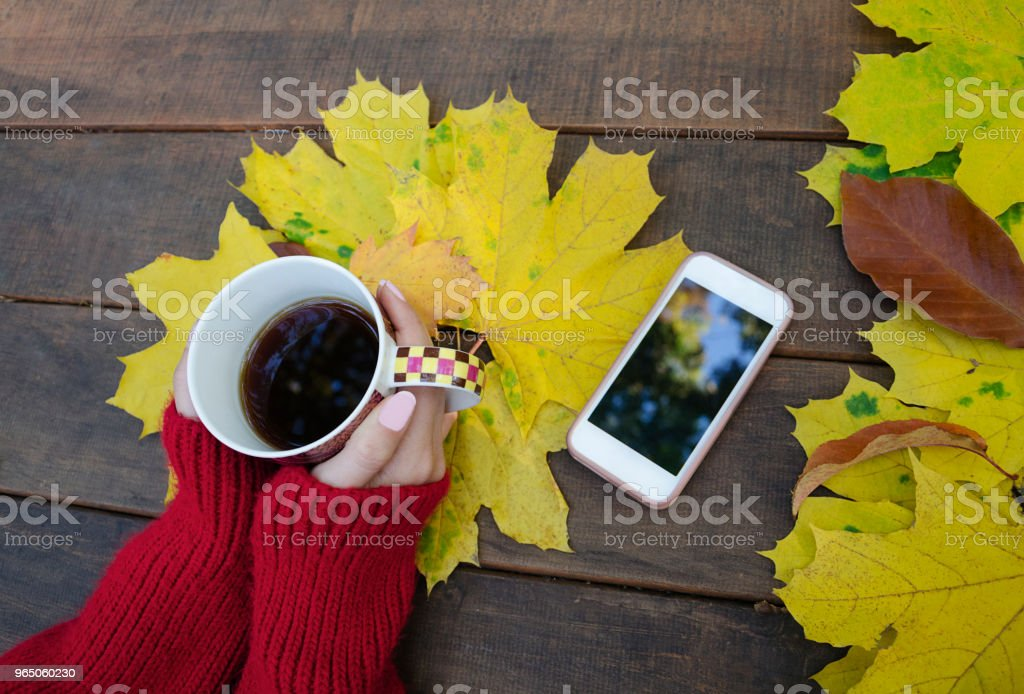 cup of hot drink in female hands royalty-free stock photo