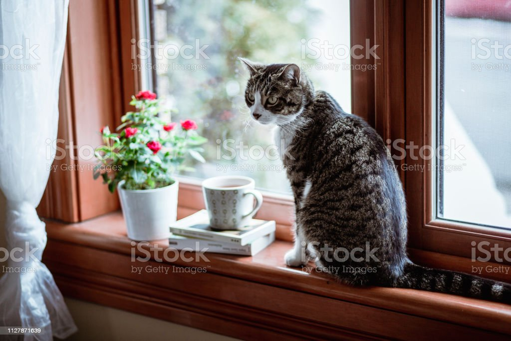 tea hot drink, potted plant, domestic catl, home interior