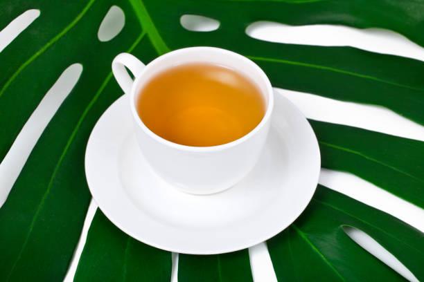 tasse de thé sur une feuille de monstera - jungle menu photos et images de collection