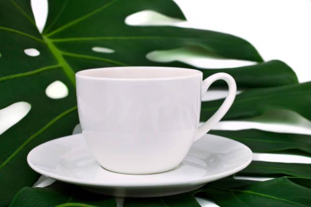 tasse de thé sur une lame de monstera - jungle menu photos et images de collection